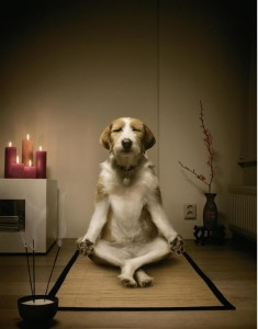 You could even meditate on why dogs don't meditate.