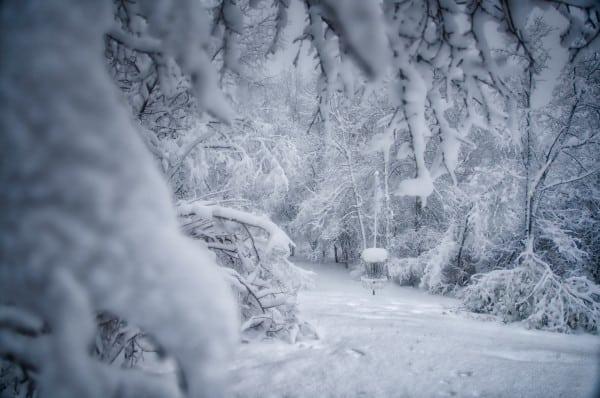 disc golf image, winter wonderland